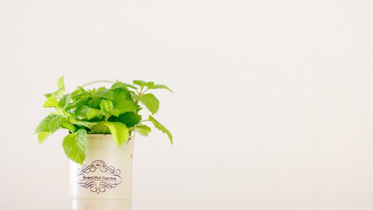 白い部屋に観葉植物