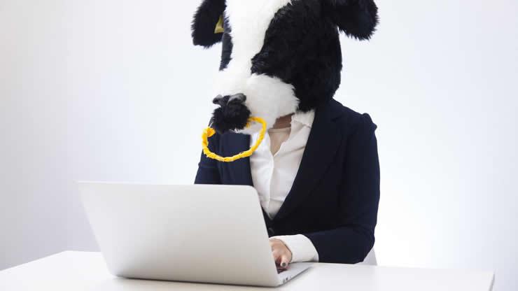 パソコン操作する牛