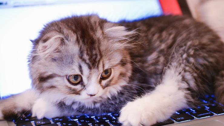 パソコン操作を邪魔する猫