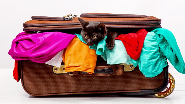 バッグの中に黒猫