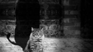 影の長い猫のイメージ