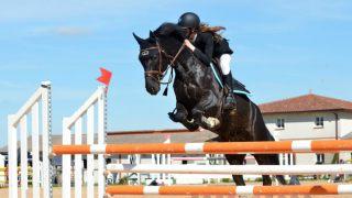 馬が障害物を飛び越えるイメージ