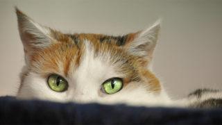 物陰から様子を見る猫のイメージ